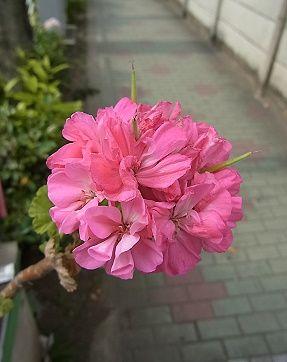http://www.hana300.com/zerany2.jpg